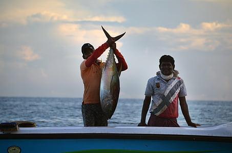 Srí lanka, Fischer, Rybolov, topánka, tuniak, ryby, morgenstimmung