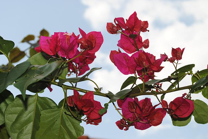 flowers, roses, detail, color pink, pink flower, flower, pink flowers