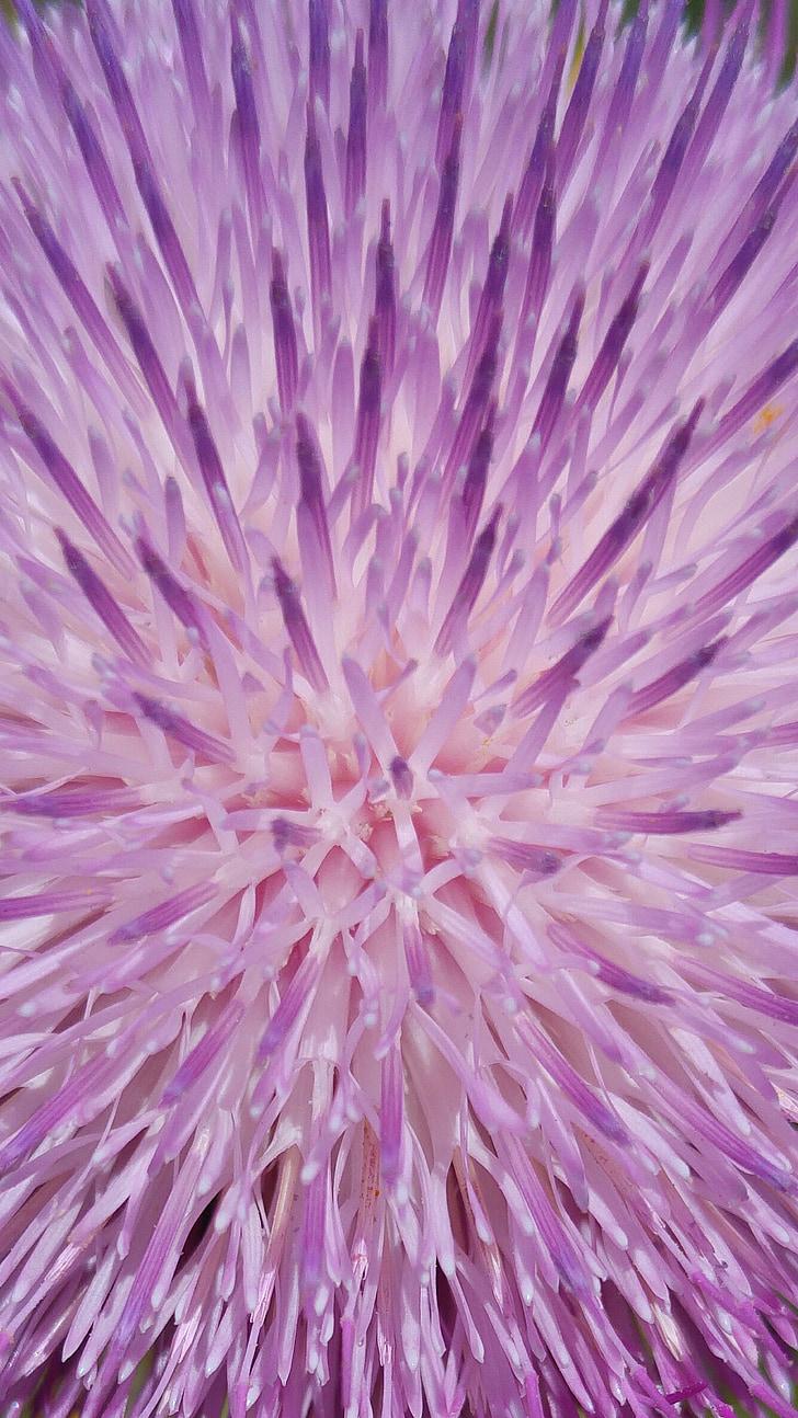arrière-plan, papier peint, modèle, conception, Purple, couverture, Vector