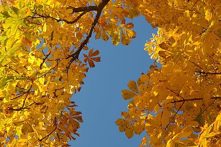kastanilehtedesse, Sügis, sügisel värvi, lehed, puu, kastan, Kastanipuu