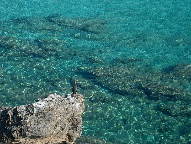 птица, море, вода, вода птица, природата, синьо