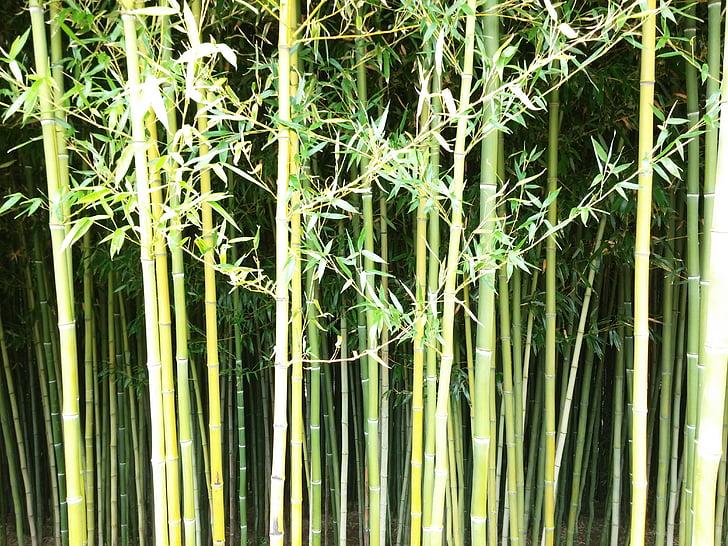 bambusest, seina, roheline, loodus, taim, muster, idamaine