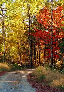 con đường mùa thu, mùa thu, lá, rừng, Thiên nhiên, cảnh quan, mùa giải