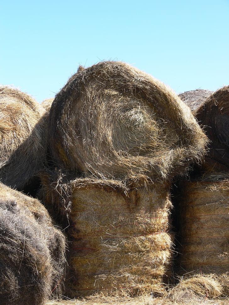 paller, Montana, fenc, granja, terres de conreu, escena, blat