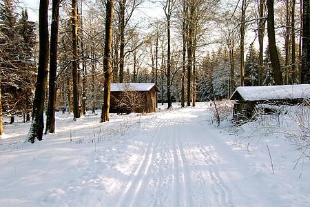 zimní les, sníh, Zimní, pryskyřice, stezka, zasněžené