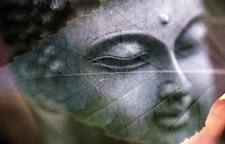 Đức Phật, lá, Tất cả là một, tôn giáo, Phật giáo, thiền định, Đức tin