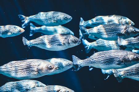 animals, close-up, fish, fishes, school of fish, underwater, water
