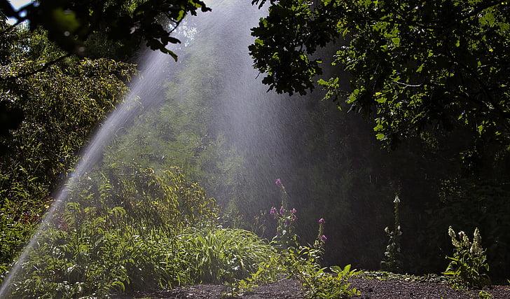sprinkler watering, woodland, garden, watering
