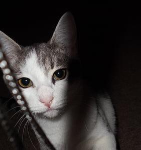 子猫, 猫, ホワイト, かわいい, 子猫, 動物, 動物