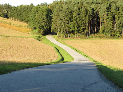 forest road, away, forest path, road, forest, landscape, germany