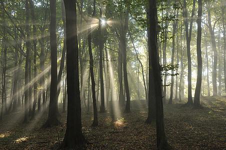 forest, sun, sunrise, light, rays, fog, the rising sun