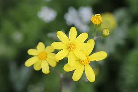 roheline, kollane, lill, Aed, taim, lilled, Kaunis