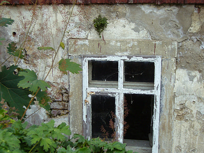 old house, window, old, plaster, new green, plant, architecture