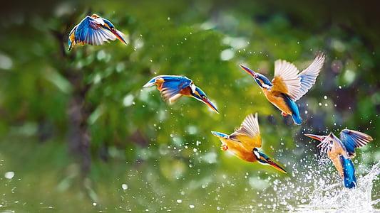 uccelli, natura, acqua, naturale, bianco, volare, colorato