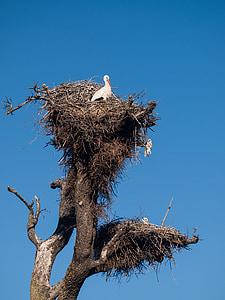 unfortunately, nest, birds, fly, stork, wings, flight