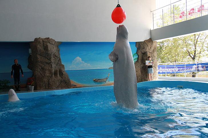 Вбивця китів, дельфінарій, трюки