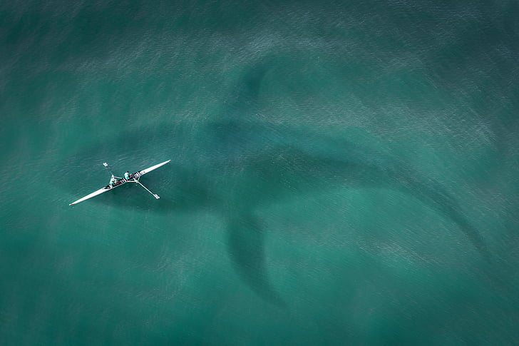 boot, from above, top view, hai, great white shark, shark attack, sea