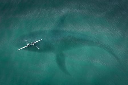 завантаження, зверху, вид зверху, Хай, Велика біла акула, нападу акули, море