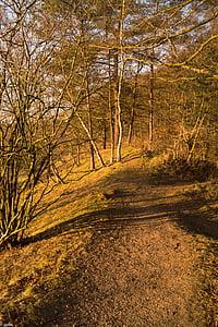 camí del bosc, sol, bosc, natura, tardor, estat d'ànim, paisatge