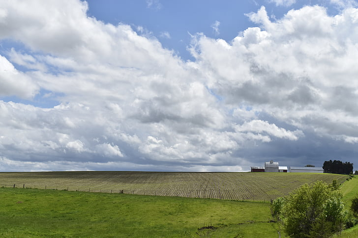 farmland, american farmer, agriculture, farm, farmer, farming, outdoor