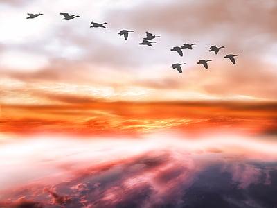 taivas, pilvet, hanhet, lentokyvytön hanhet, katettu sky, Linnut, lentää