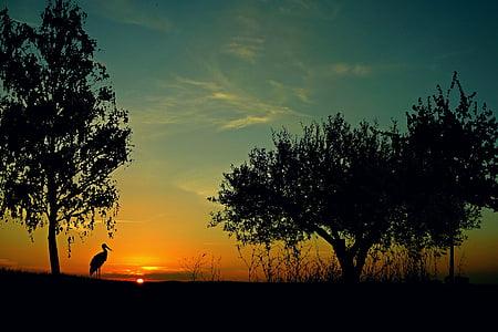 sunset, landscape, evening sky, afterglow, twilight, stork, animal
