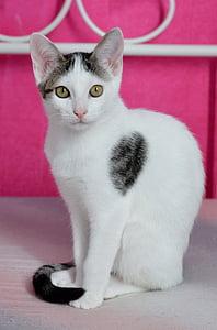 cat, pet, cat portrait, mieze, kitten, young cat, pets
