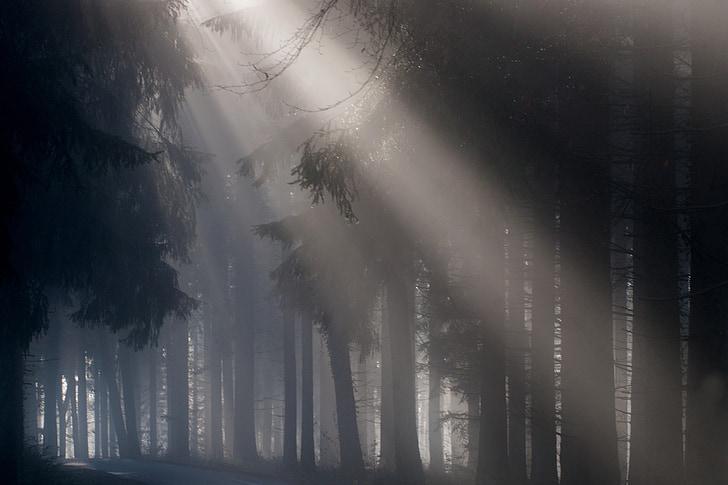 boira, feix de llum, mística, Sunbeam, bosc, natura, l'hivern