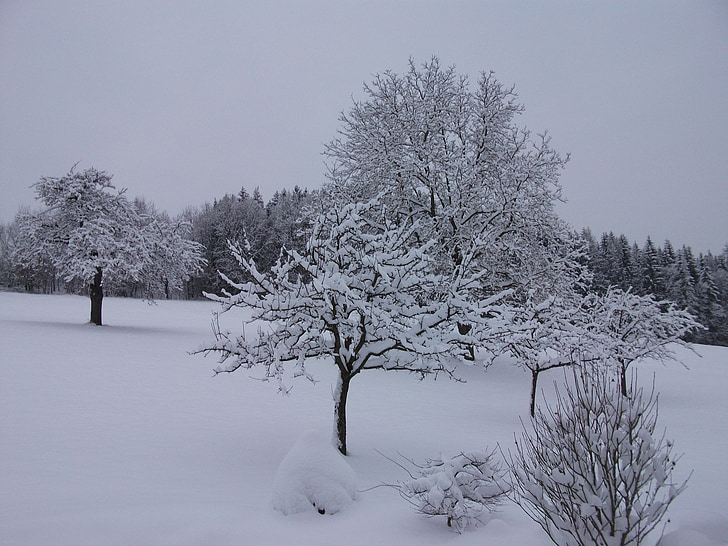 winter, snow, snow magic, winter forest, wintry, trees, snowy