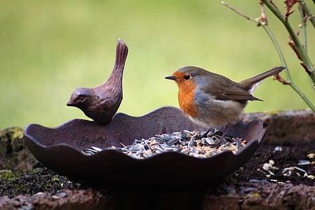 robin, bird, bird seed, bird bath, animal, eat, peck