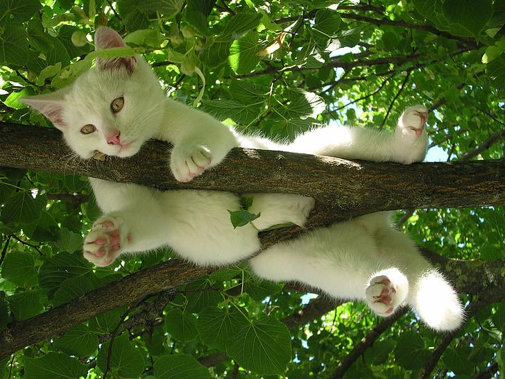 kat, natur, slappe af, afslapning, resten, favorit sted, dyr