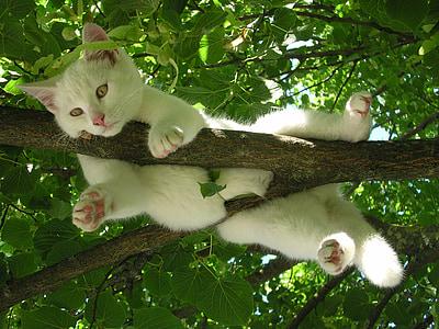 kass, loodus, lõõgastuda, lõõgastus, ülejäänud, lemmik koht, looma