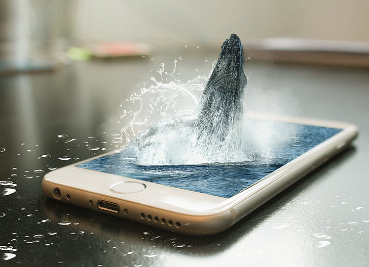 telefon, Whale, Remix, design, iPhone, Photomanipulation, telefon