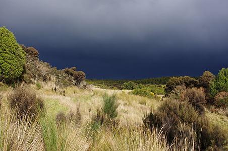 Uus-Meremaa, väli, taimed, Heath, maastik, loodus, Zealand
