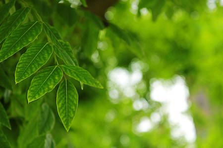 letné, listy, Zelená, svetlé škvrny, pozadie, Leaf, Príroda