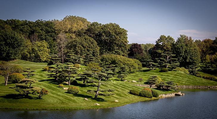 dārzi, japāņu dārzi, Zen, botāniskais, ezers, rāms