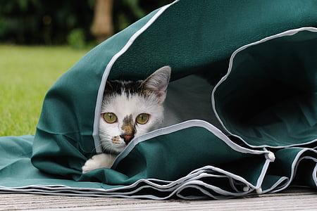 cat, feline, play, parasol, animal, domestic cat, pets