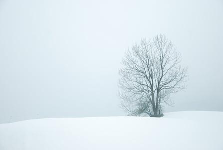 calma, fred, boira, Ze, paisatge, natura, temporada