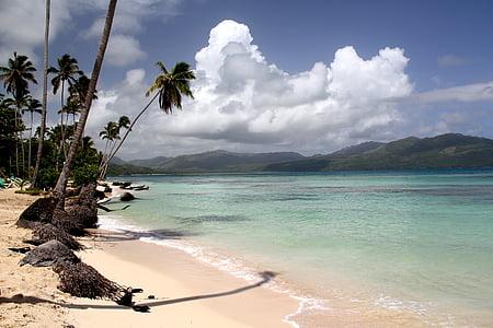 Beach, Palm, Karibská oblasť, Dominikánska republika, biely piesok, biely piesok pláží, piesočnaté pláže