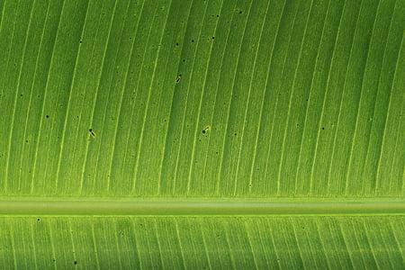 Yeşil, yaprakları, bitkiler, Bahçe, Sonbahar, Sonbahar, doğa
