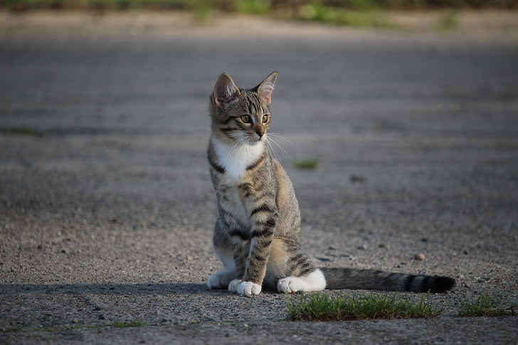 35913060983e Δωρεάν φωτογραφία  γάτα