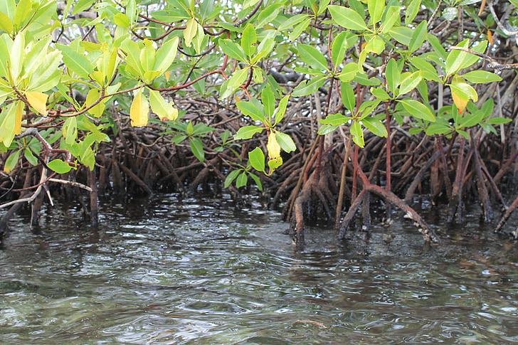 Мангрова блато, пейзаж, естествени, природата, остров, Оазис, Панама