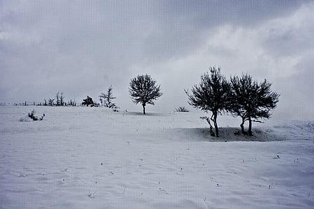 tree, snow, winter, snow landscape, landscape, çaycuma