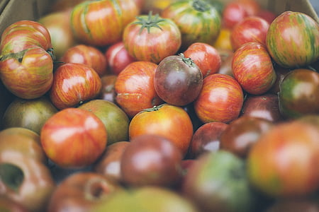 tomatos, rau quả, thực phẩm, tươi, khỏe mạnh, hữu cơ, màu đỏ