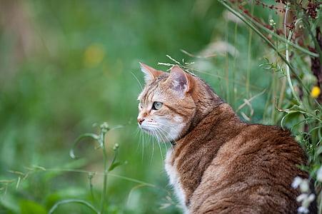 pisica, feline, animale, animale, animal de casă, domestic animal, ochi de pisica