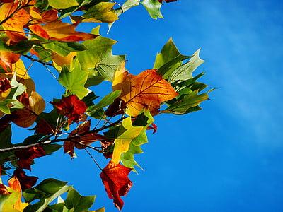 Sonbahar, sonbahar yaprakları, yaprakları, sonbahar renk, yaprak, sonbahar yaprak, renkli