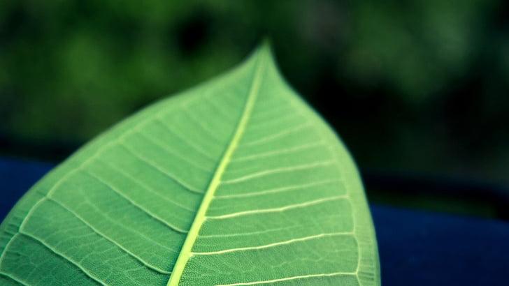 fulla, fulla verda, les fulles