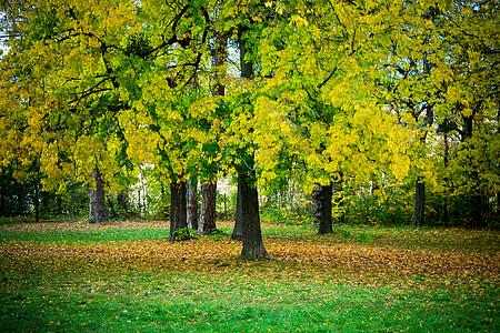 autumn, wood, foliage, red, yellow, seasons, garden