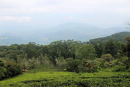 Tea estate, Plantation, čaj, Estate, Zelená, Príroda, Hill vedľajšie