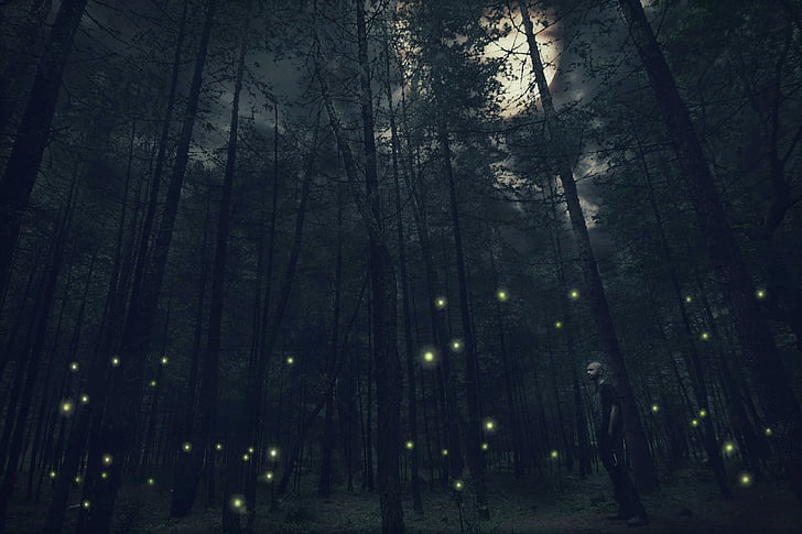 fantasy, moon, night, jungle, dark, nature, forest